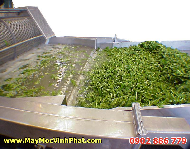 Hình ảnh thực tế hiệu quả của máy rửa rau công nghiệp, dây chuyền rửa rau quả Vĩnh Phát