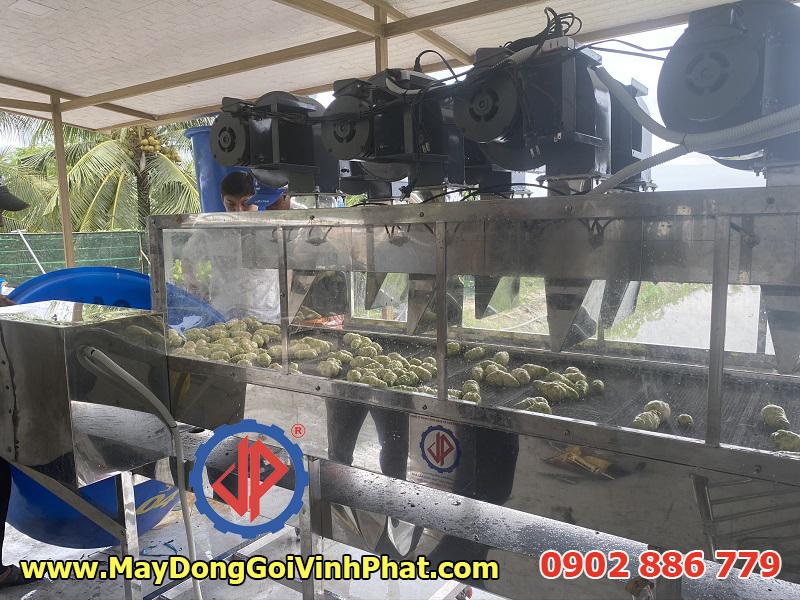 Hệ thống băng tải thổi khô quả  của dàn máy rửa trái nhàu Vĩnh Phát chế tạo